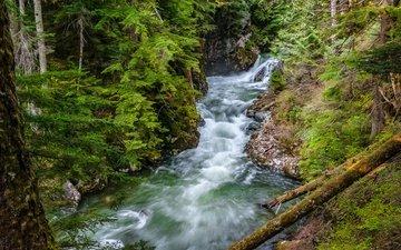 деревья, река, лес, хвоя, ветки, стволы, вашингтон, поток, сша, denny creek