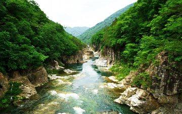 река, скалы, природа, камни, растения, япония