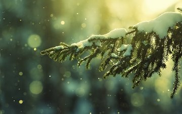 snow, nature, needles, winter, branches, frost, bokeh