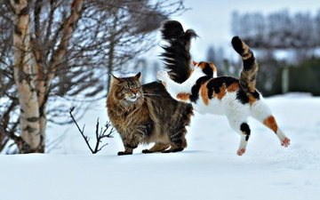 snow, winter, the situation, jump, cats, attack