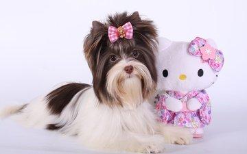 собака, игрушка, щенок, бантик, котик, терьер, йоркширский терьер