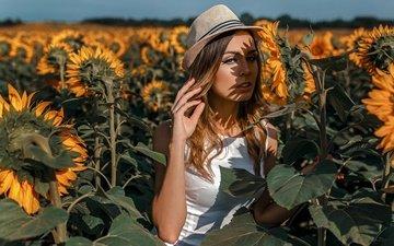 солнце, лето, подсолнухи, шляпка