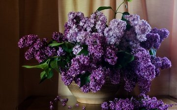 flowers, curtains, table, bouquet, lilac, still life
