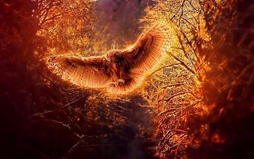 light, trees, owl, creative, fire