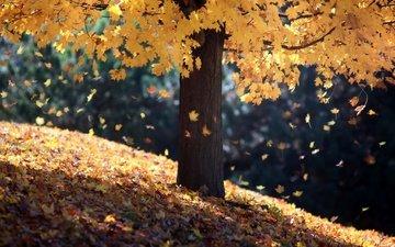 свет, дерево, листья, склон, осень, листопад