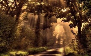 свет, дорога, деревья, солнце, лес, лучи, утро, туман