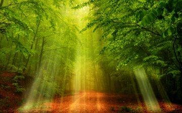свет, дорога, деревья, природа, лес, солнечные лучи