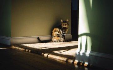 light, cat, look, house, room, sitting, floor, wall, shadows, mat