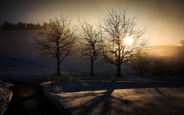 light, trees, winter, morning