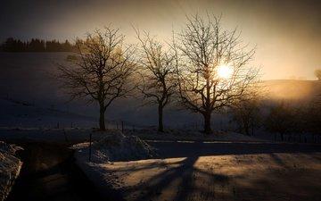 свет, деревья, зима, утро