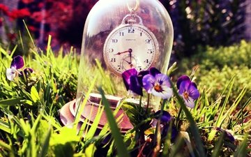 цветы, трава, лето, часы, стекло, анютины глазки