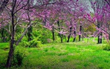 трава, деревья, парк, весна
