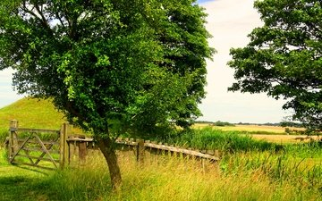 grass, trees, greens, field, summer, the fence