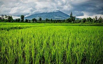 трава, облака, деревья, солнце, зелень, поле, гора, филиппины, bicol region