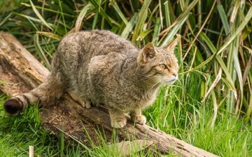 трава, природа, кот, мордочка, усы, кошка, взгляд, коряга