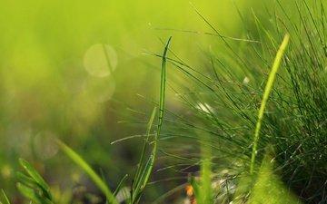 grass, nature, greens, macro