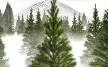 trees, snow, winter, fog, branch, mountain, spruce