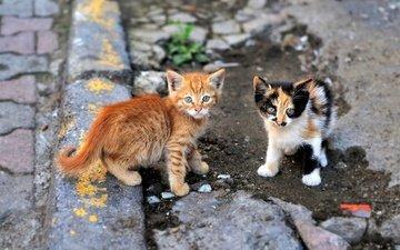 усы, взгляд, улица, кошки, котята, асфальт, мордочки