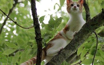 ветка, дерево, листья, кот, мордочка, усы, кошка, взгляд, котенок