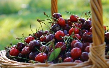 фон, черешня, ягоды, вишня, корзинка, лукошко