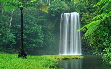 trees, water, river, nature, forest, landscape, waterfall, tropics, jungle