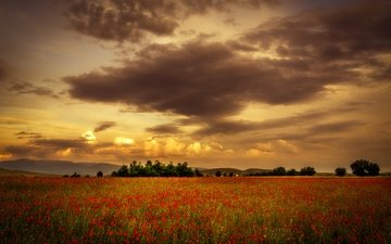 the sky, flowers, clouds, sunset, field, summer, red, maki