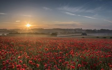 flowers, sunset, fog, field, summer, red, maki