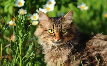 flowers, greens, cat, muzzle, mustache, look, face