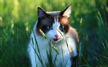 greens, cat, muzzle, look, grass