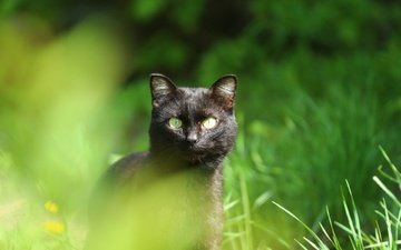 greens, cat, muzzle, look