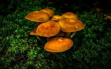 природа, зелень, растения, макро, грибы