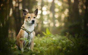 зелень, собака, блики, luna, боке, dackelpup