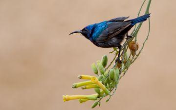 цветы, ветка, природа, фон, птица, клюв, перья, нектарница