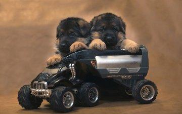 животные, игрушка, щенки, собаки, немецкая овчарка, овчарка, машинка