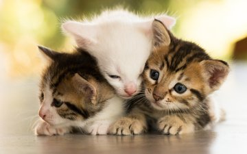 animals, muzzle, mustache, look, cats, kids, kittens, cubs, trinity