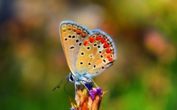 nature, insect, butterfly, wings, bokeh