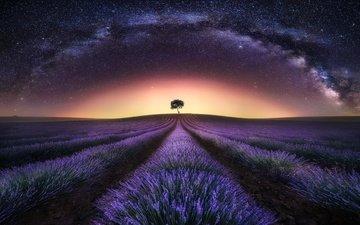 небо, свет, ночь, дерево, звезды, поле, лаванда, зарево, млечный путь