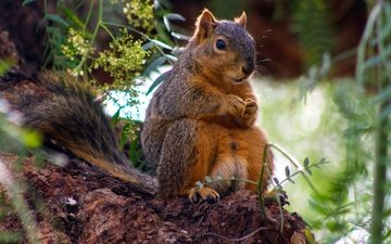 grass, nature, tree, sitting, stems, protein, squirrel, rodent