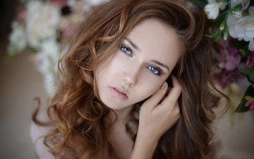 девушка, взгляд, модель, волосы, лицо, голубые глаза, шатенка