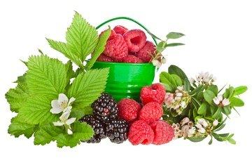 листья, малина, ягода, белый фон, цветочки, ежевика, ведерко