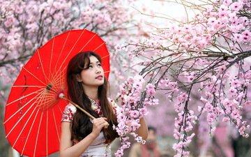 цветение, девушка, взгляд, сад, волосы, лицо, сакура, зонтик, азиатка