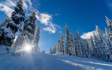 the sky, clouds, trees, the sun, snow, nature, forest, winter