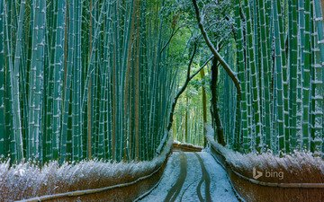 nature, forest, winter, bamboo, bing