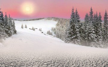 trees, the sun, snow, nature, forest, winter, landscape, ate