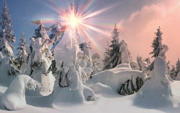 trees, the sun, snow, nature, forest, winter, landscape