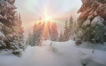 природа, лес, зима, пейзаж