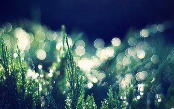 трава, растения, макро, капли, боке