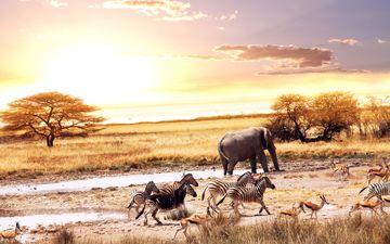 африка, слоны, саванна, зебры, антилопы