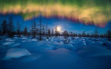 небо, ночь, снег, лес, зима, пейзаж, северное сияние