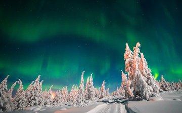 небо, деревья, снег, лес, зима, северное сияние, ели